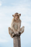 泰国的猴子 免版税库存图片