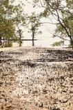 泰国美洲红树沼泽 免版税库存照片