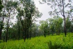 泰国自然 免版税库存照片