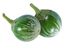 泰国茄子纠错文件传输协议或者老挝人绿色镶边茄子 免版税库存图片
