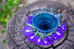 泰国草本热的豌豆汁或蓝色豌豆花,准备好喝在玻璃,安置在一个木地板 绿色背景 免版税库存图片