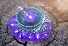 泰国草本热的豌豆汁或蓝色豌豆花,准备好喝在玻璃,安置在一个木地板 绿色背景 库存图片