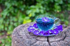 泰国草本热的豌豆汁或蓝色豌豆花,准备好喝在玻璃,安置在一个木地板 绿色背景 免版税库存照片