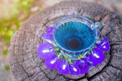 泰国草本热的豌豆汁或蓝色豌豆花,准备好喝在玻璃,安置在一个木地板 绿色背景 库存照片