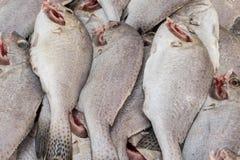 泰国许多鱼在市场上 图库摄影