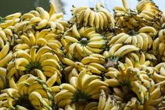 泰国香蕉 库存照片
