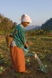 泰国,一名老泰国农民妇女,被浇灌她的菜园 库存图片