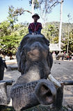 泰国, Chiang Mai,亚洲大象 免版税库存照片