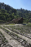 泰国, Chiang Mai,卡伦村庄 库存照片