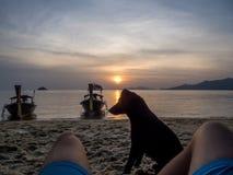 泰国-在海滩的狗 免版税库存图片
