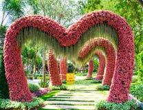 泰国- 2016年3月15日:桃红色心脏方式在老虎动物园庭院n里 免版税图库摄影