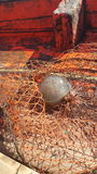泰国水母#5 免版税图库摄影