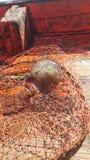 泰国水母#6 库存图片