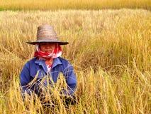 泰国1位的农夫 库存照片