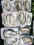 泰国meckerel 免版税图库摄影