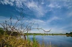 泰国ricefield 免版税库存图片