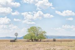 水泵风车,水坝, kraal和柳树 图库摄影