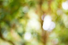 活泼的绿色棕色迷离背景 图库摄影