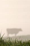 泽西母牛剪影  免版税库存照片