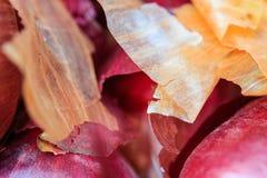 洋葱皮在自然光的农夫` s市场上 免版税库存图片