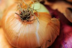 洋葱皮在自然光的农夫` s市场上 图库摄影