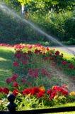 洒一朵绿色草坪和红色花 图库摄影
