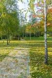 洒与下落的叶子在跑在桦树之间的公园 免版税库存图片