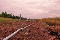 洒农业生产的灌溉 图库摄影