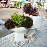 洗手间的植物 库存照片