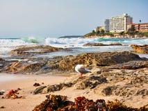 洗涤在海洋岩石,克罗纳拉海滩,悉尼,澳大利亚的波浪 免版税图库摄影