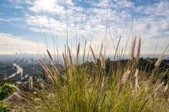洛杉矶看法从好莱坞Hills的 进城la 好莱坞露天剧场 日观察的猫坐温暖晴朗的结构树 在蓝天的美丽的云彩 免版税库存照片