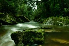 洞小河国家新的paparoa公园西兰 免版税库存照片