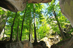 洞森林 免版税库存图片