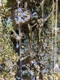 洞穴滴水 库存图片