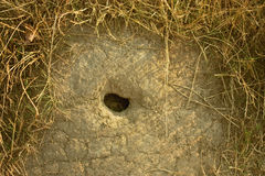 洞穴 免版税库存照片