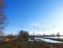 洪水区域和鸟,立陶宛 免版税库存照片