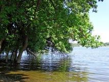 洪水在森林里 免版税库存照片