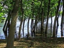 洪水在森林里 免版税图库摄影