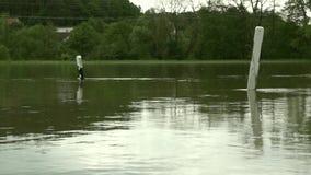 洪水 股票录像