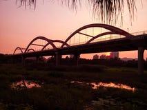 洪湖风景 库存图片