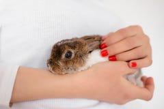 活兔子在女性手上 兔子关闭 逗人喜爱的复活节兔子 库存图片