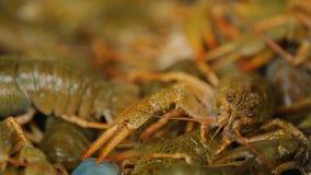 活小龙虾在地方市场,传统海鲜,烹调的买的产品上 股票录像