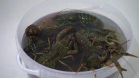 活小龙虾渐增音量一个桶水 影视素材