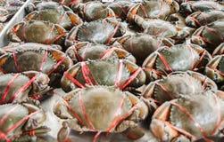 活新鲜的螃蟹 免版税库存图片