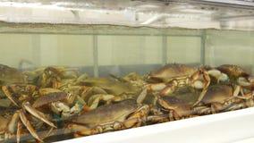 活螃蟹的行动在坦克的 股票录像