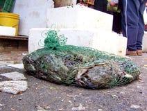 活青蛙在一只网兜的待售 库存图片