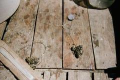 活青蛙,刺穿在一个大钓鱼钩 免版税库存照片