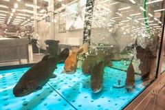 活鱼在超级市场水族馆,新鲜的健康海鲜的待售 库存照片