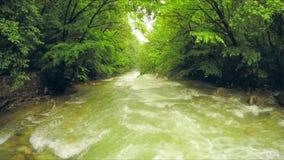 流动下来在豪华的绿叶中的安静河在森林 股票视频