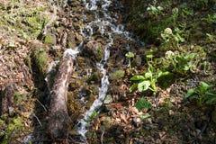 流动下来从山的小河 库存图片
